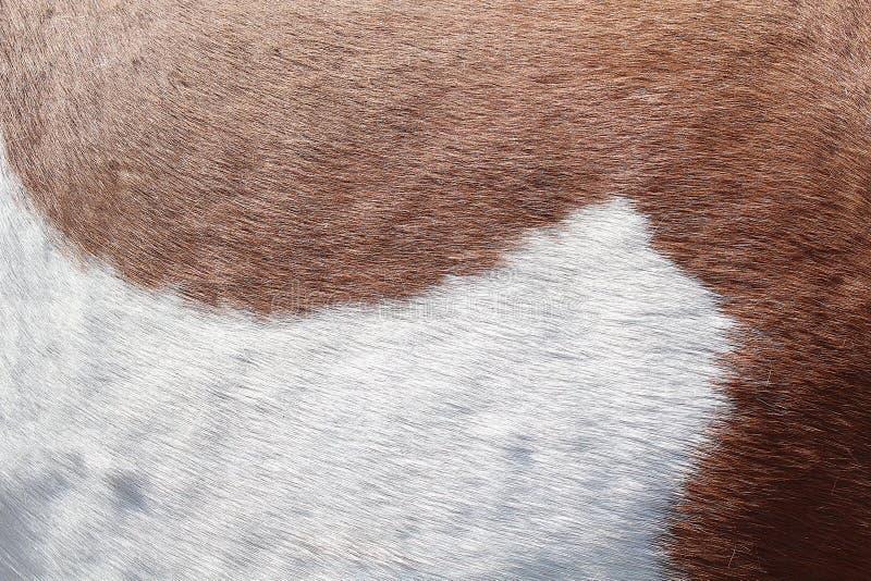 Achtergrondtextuur van de huid en de wol van een varken, paard, koe royalty-vrije stock fotografie