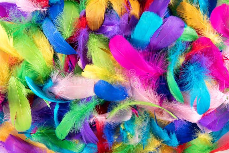 Achtergrondtextuur van helder gekleurde veren stock fotografie
