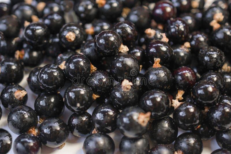 Achtergrondtextuur van het druipen zwarte cuurant stock afbeeldingen