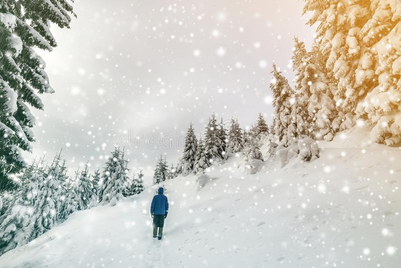 Achtermening die van toeristenwandelaar zich op steile berghelling bevinden op exemplaar ruimteachtergrond van nette bomen en dui royalty-vrije stock fotografie