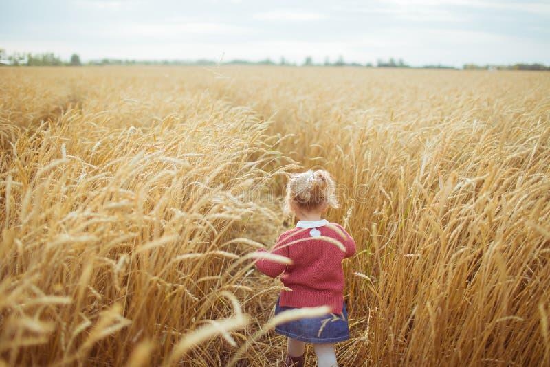 ACHTERmening: Een klein meisje loopt op een geel landbouwgebied stock afbeeldingen