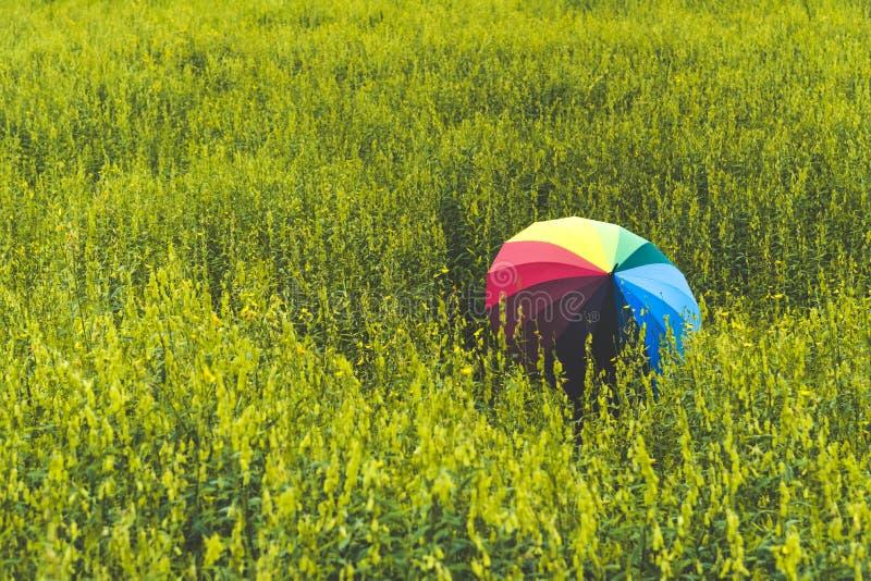 Achtermening van de kleurrijke holding van de regenboogparaplu door vrouw op weidegebied Mensen en manierconcept Aard en ontspann stock afbeelding