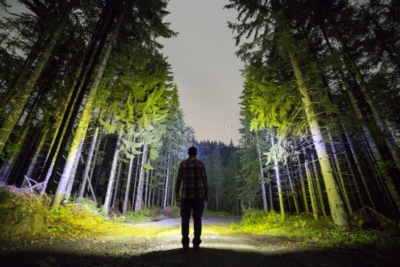 Achtermening van de mens met hoofdflitslicht die zich op bosgrondweg onder lange helder verlichte nette bomen onder mooi bevinden stock afbeelding