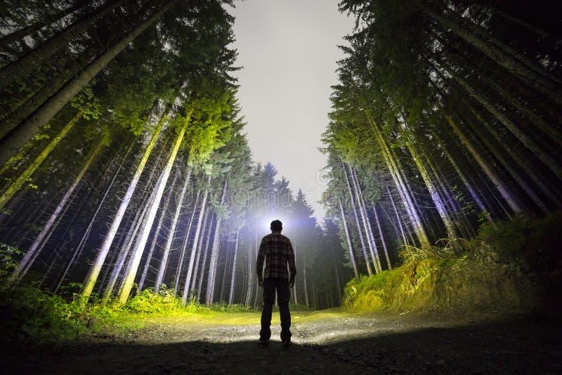 Achtermening van de mens met hoofdflitslicht die zich op bosgrondweg onder lange helder verlichte nette bomen onder mooi bevinden royalty-vrije stock fotografie