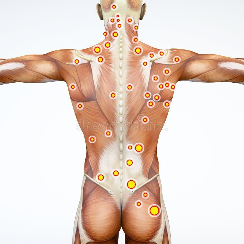 Achtermening van een mens en zijn trekkerpunten Anatomiespieren het 3d teruggeven stock illustratie