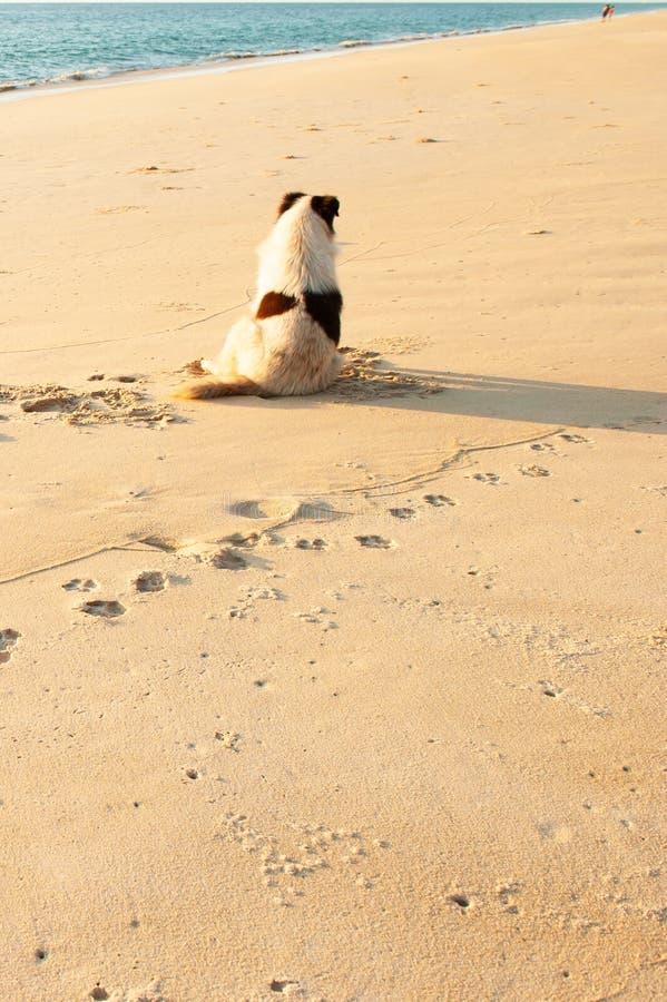 Achtermening van gelukkige hond die op het zonsondergangstrand genieten van met paartoeristen royalty-vrije stock afbeelding