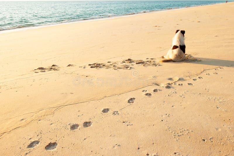 Achtermening van gelukkige hond die op het zonsondergangstrand genieten van met paartoeristen royalty-vrije stock afbeeldingen