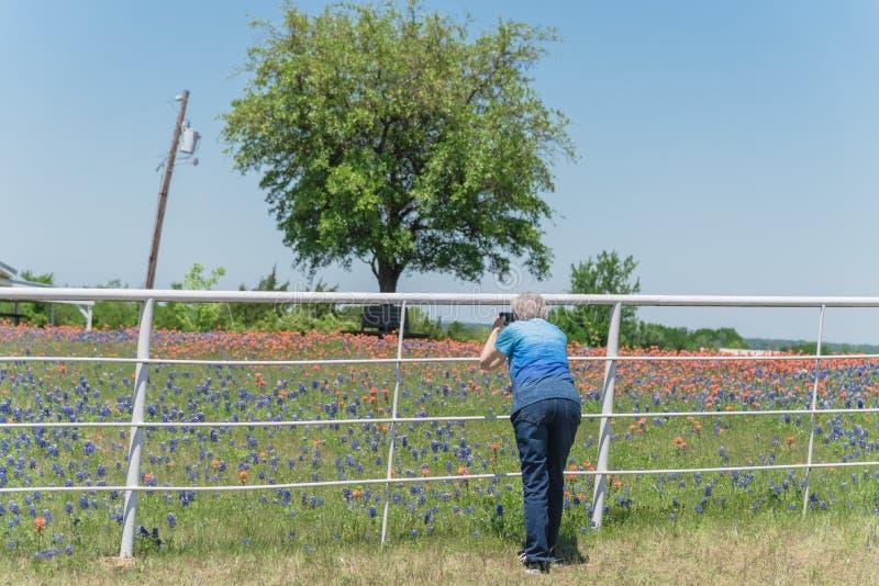 Achtermening van gezonde gerijpte dame die beeld van Bluebonnet-bloesem nemen stock afbeelding