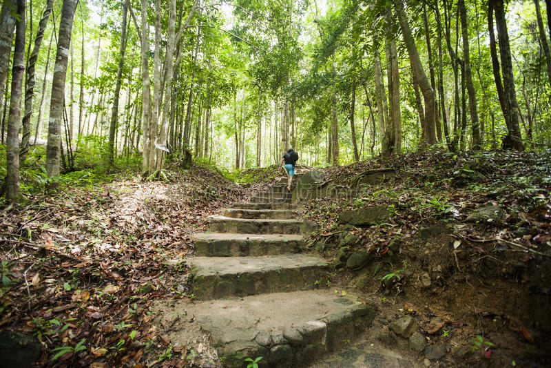 Achtermening van jong mannetje die in bos, Koh Pha Ngan, Thailand wandelen royalty-vrije stock foto's