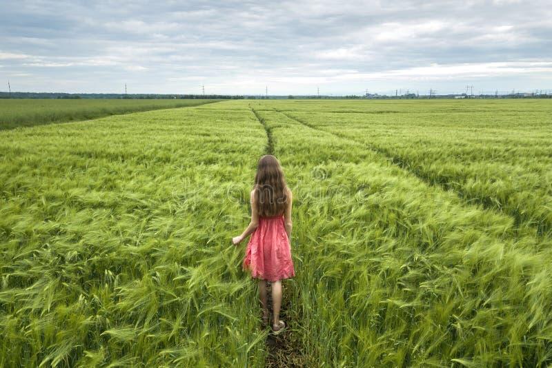 Achtermening van jonge romantische slanke vrouw die in rode kleding met lang haar op groen gebied op zonnige de zomerdag lopen op stock afbeeldingen