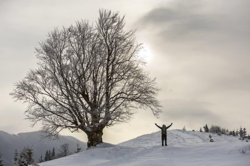 Achtermening van toeristenwandelaar met zich in witte schone diepe sneeuw bij grote boom op achtergrond van bosrijke bergen bevin royalty-vrije stock fotografie