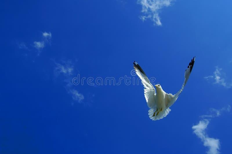 Achteruit het vliegen royalty-vrije stock foto