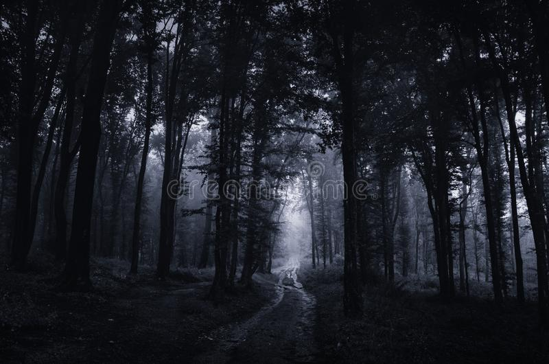 Achtervolgd bos bij nacht met weg die door griezelige bomen gaan stock fotografie