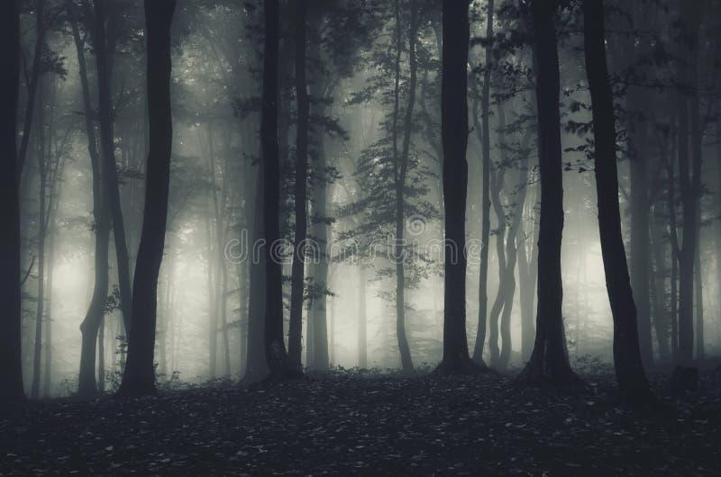 Achtervolgd donker bos met mist stock fotografie