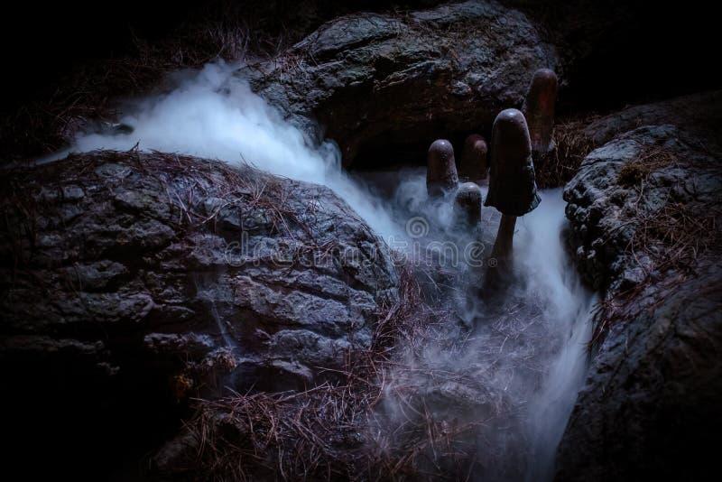 Achtervolgd Halloween Forest With Mushrooms And Fog stock afbeeldingen