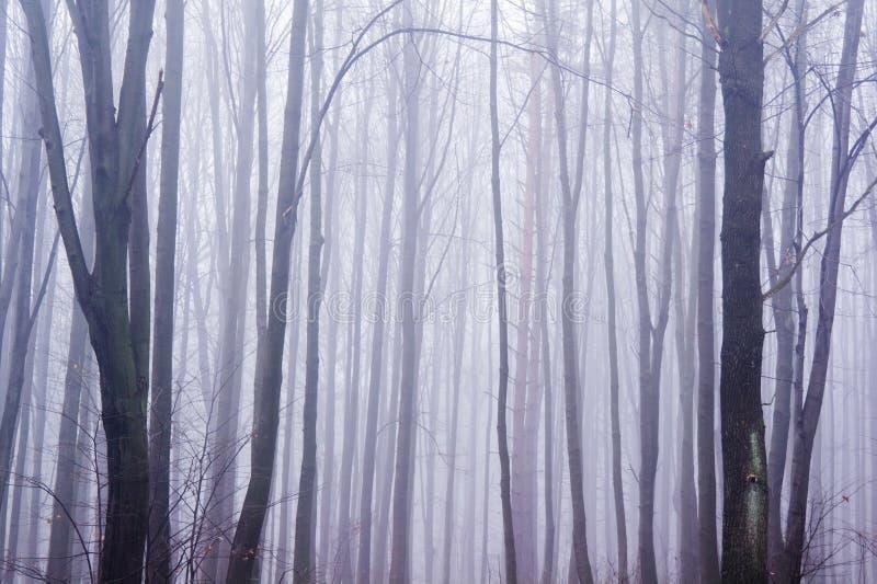 Achtervolgd mistig bos stock foto