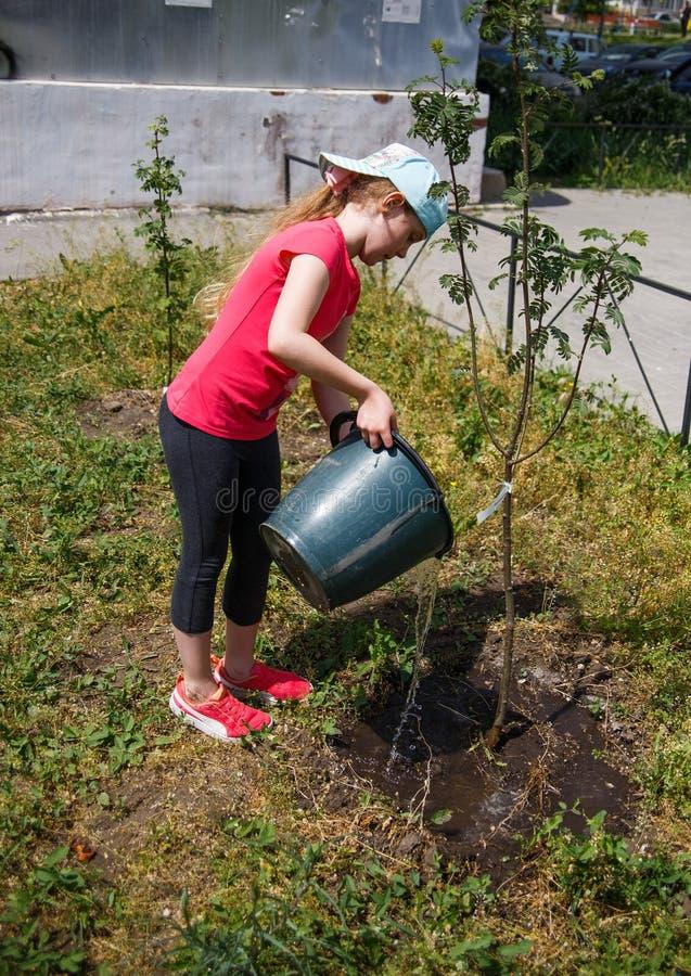 Achtjähriges Mädchen, das einen Baumschößling von einem Eimer wässert stockfoto
