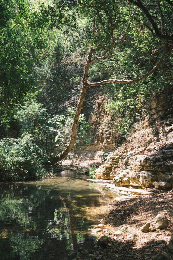 Achzivrivier in de zomer in het grote bos stock afbeeldingen