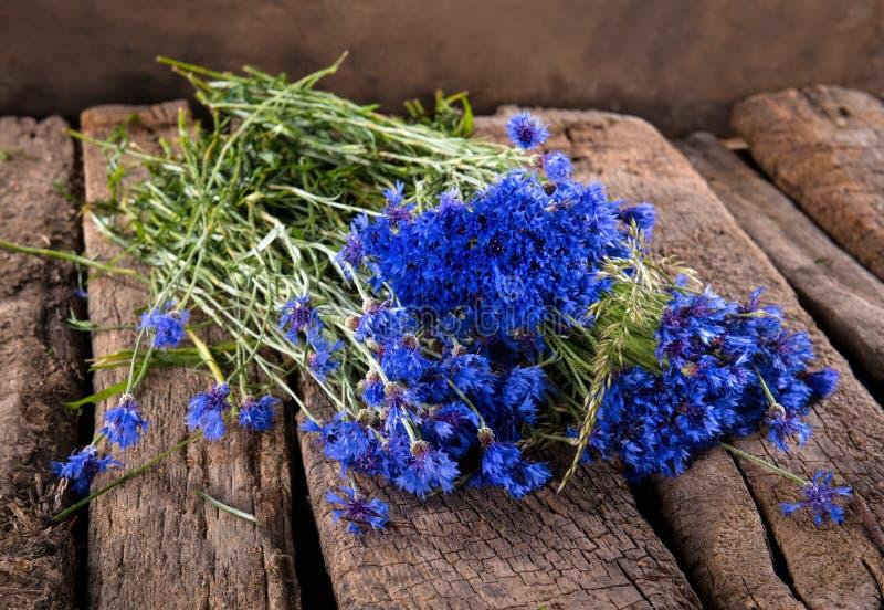 Acianos azules imagen de archivo