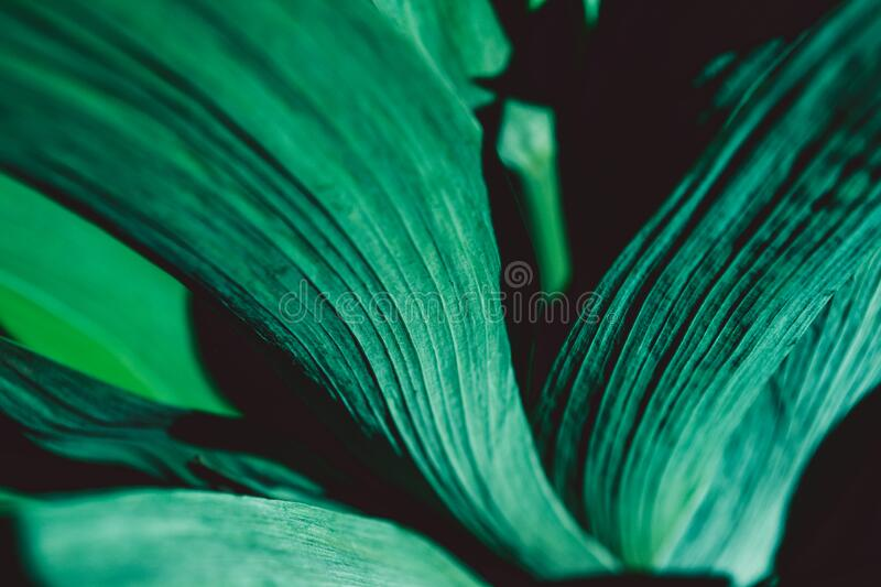 Acid-green leaves. Green leaf texture. Floral background. Botanical garden. Vivid colour. Abstract foliage close-up. Nature spring stock images