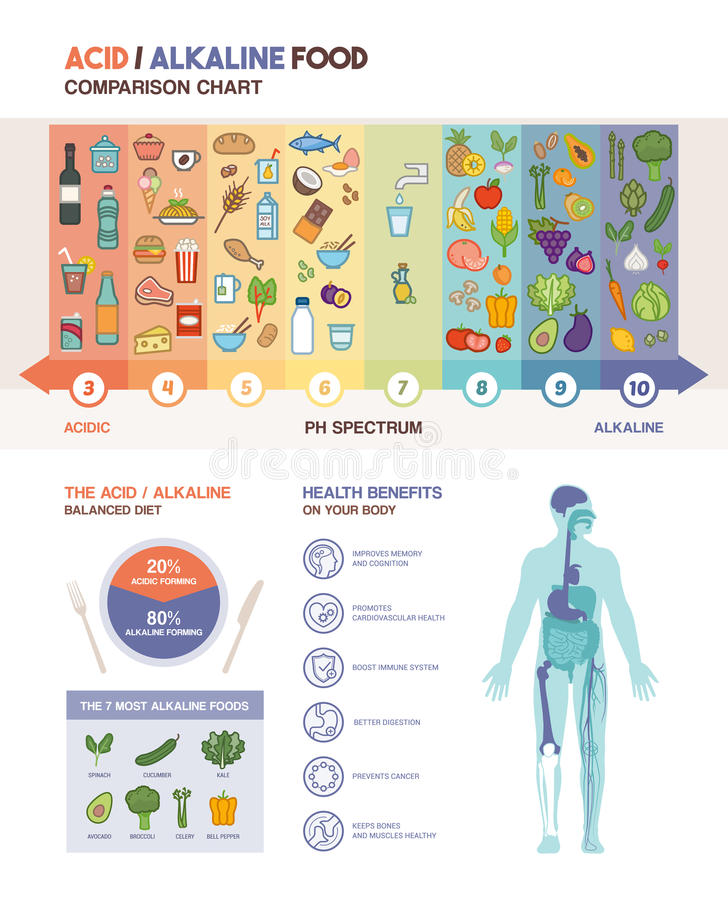 The acidic alkaline diet. Food chart infographics with food icons on a ph scale and body with health benefits icons