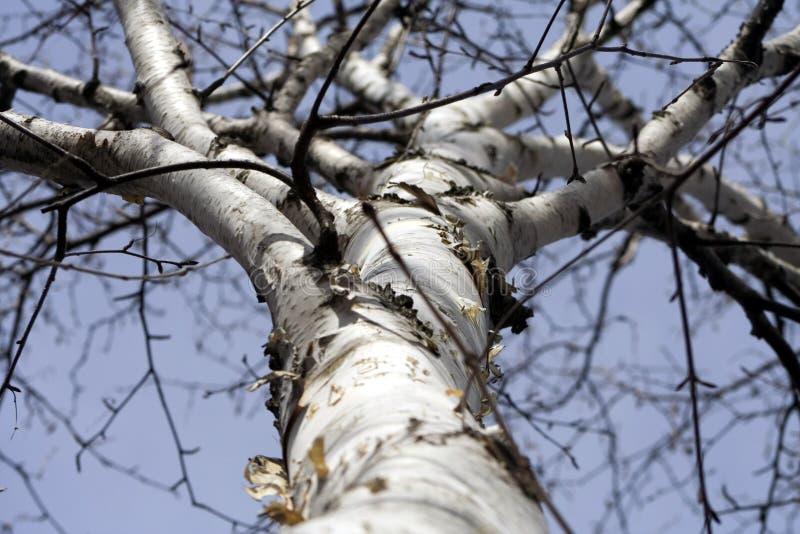 Acima de uma árvore fotografia de stock royalty free