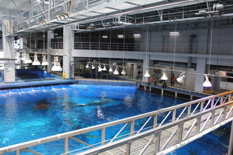 Acima do aquário gigante com tubarão de baleia imagens de stock