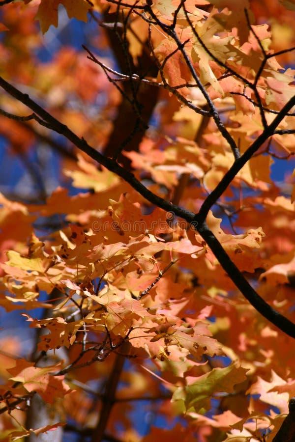 Acima do fim na árvore - 762 fotos de stock