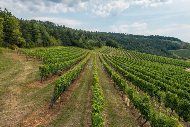 Acima do vinhedo de Borgonha em França foto de stock
