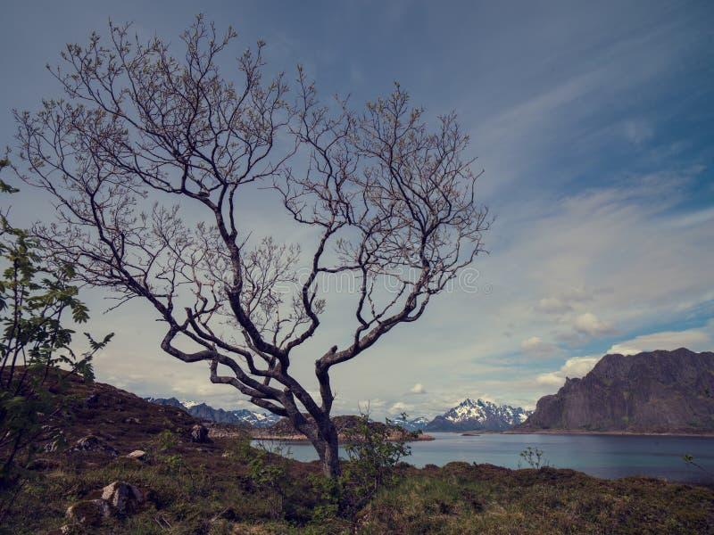 Acima em Lofoten em Noruega foto de stock