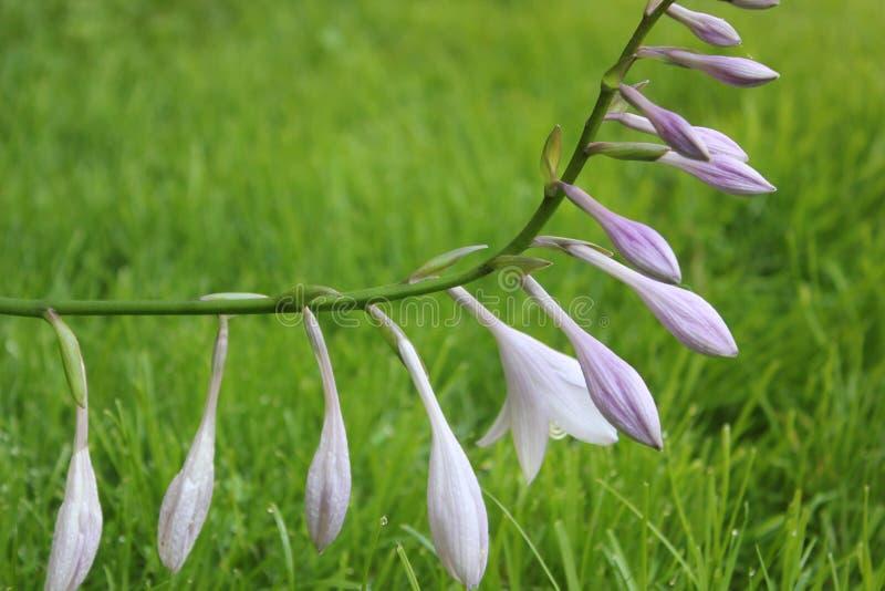 Acima-fim da flor imagem de stock