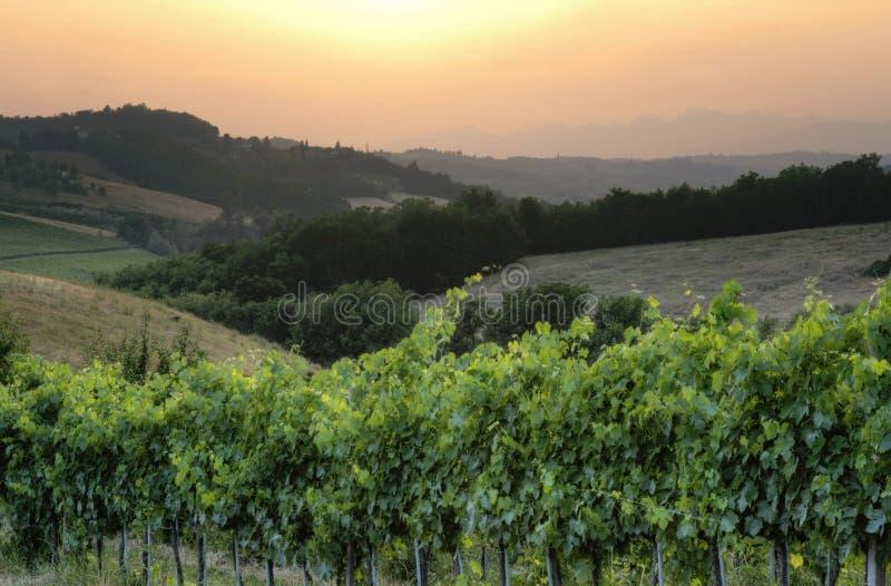 Acini d'uva italiani di Chianti al paesaggio di tramonto immagine stock