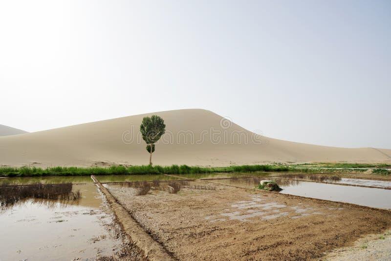 Ackerland in der Wüste stockfotografie