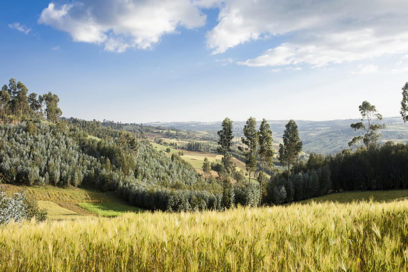 Ackerland und Wald in Äthiopien lizenzfreie stockbilder
