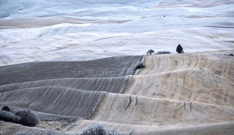 Ackerlande bedeckt mit Frost und Schnee im Winter stockfotografie