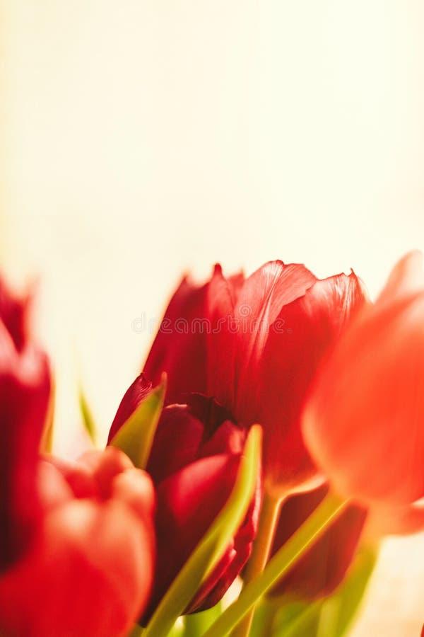 Aclare encima de su día con las flores fotografía de archivo