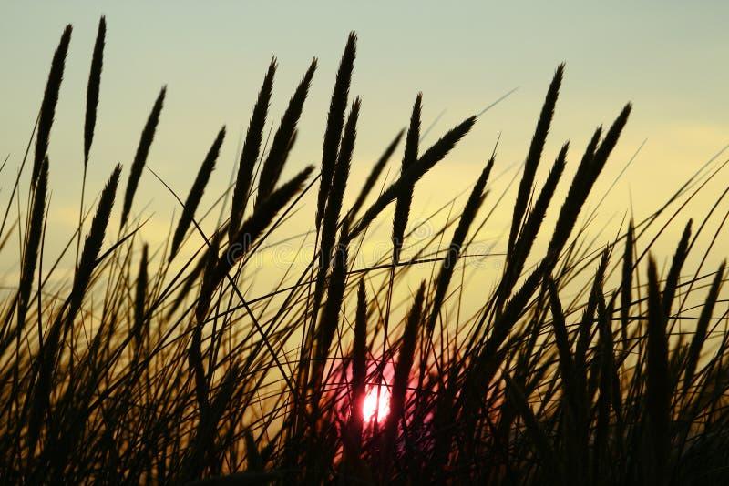 Acometidas silueteadas en la puesta del sol foto de archivo libre de regalías