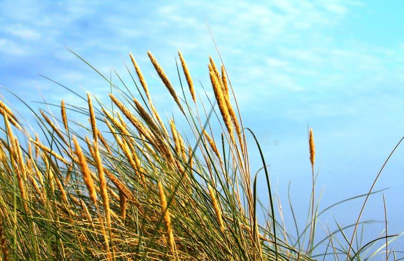Acometidas Sunlit movidas por el viento foto de archivo libre de regalías