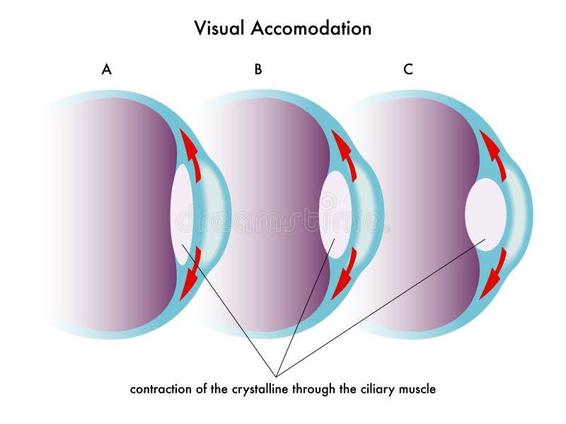 Acomodação visual ilustração royalty free