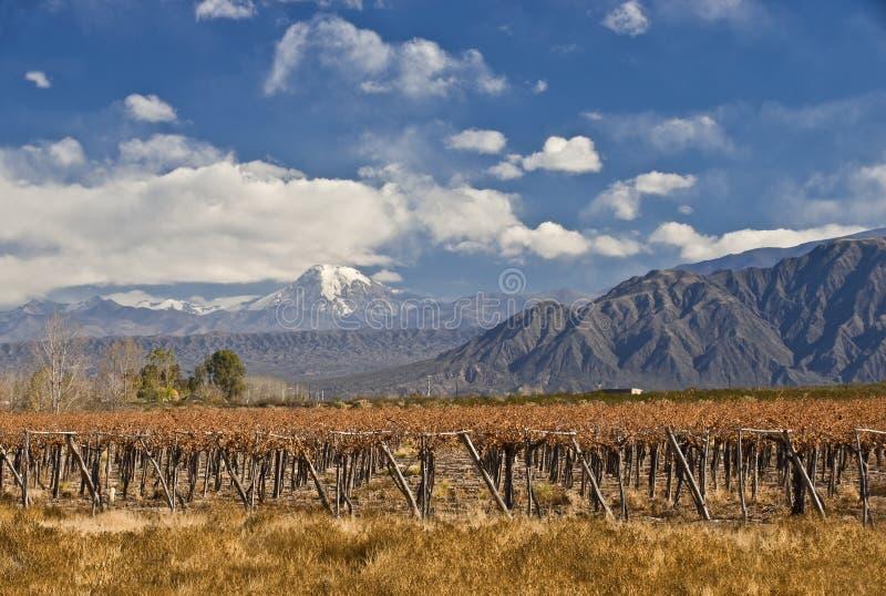 Aconcagua och vingård fotografering för bildbyråer