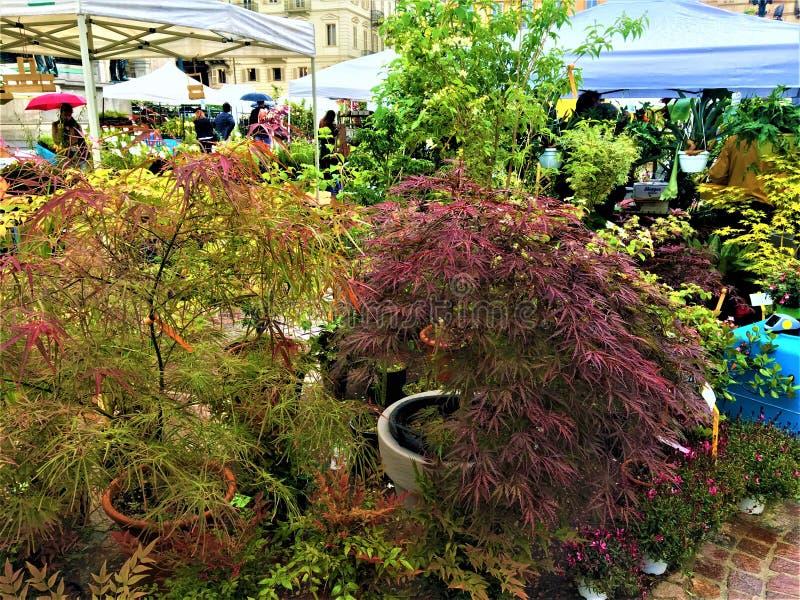 Acontecimiento de FLOR en la ciudad de Tur?n, Italia Plantas, colores, belleza y primavera imagen de archivo