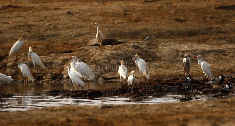 Acopio de los pájaros de agua imagen de archivo