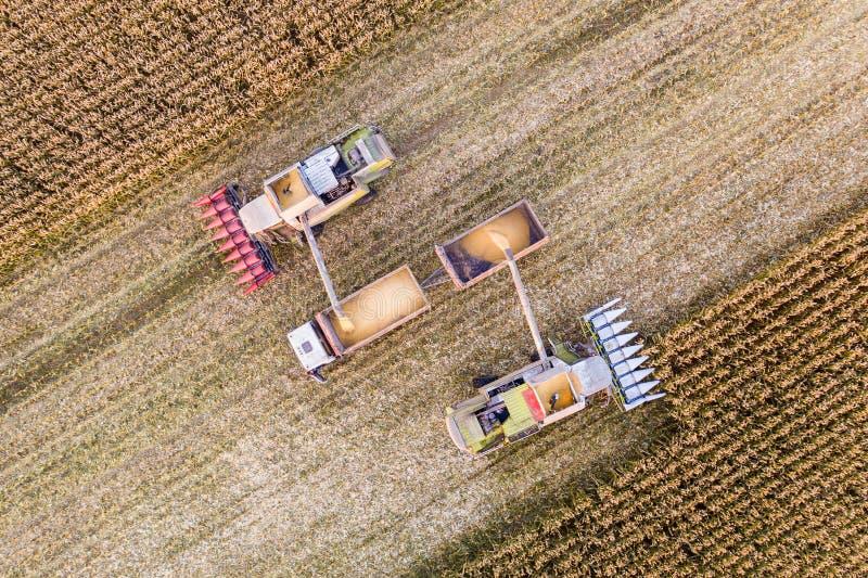 Acopio de maíz en campo Cultivando, visión aérea fotografía de archivo libre de regalías