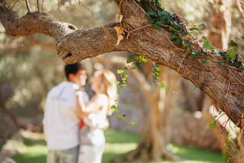 Acople o beijo sob a árvore no parque verde no por do sol fotografia de stock royalty free