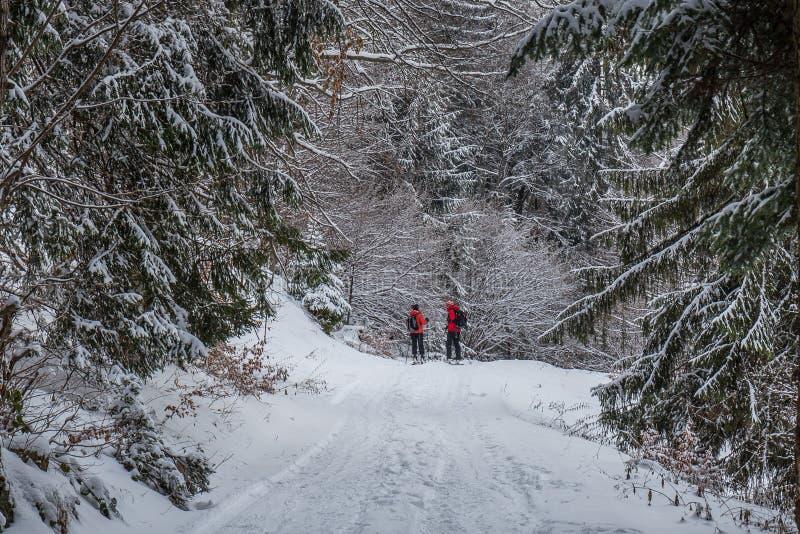 Acople o esqui nas madeiras em Poiana Brasov, a Transilvânia, Romênia imagem de stock royalty free