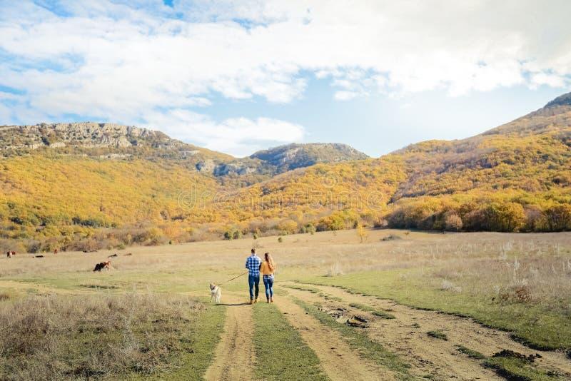 Acople o prado do campo do por do sol do outono do cão do perdigueiro da caminhada que guarda as mãos fotografia de stock royalty free