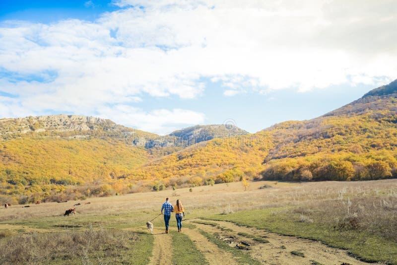 Acople o prado do campo do por do sol do outono do cão do perdigueiro da caminhada que guarda as mãos imagens de stock