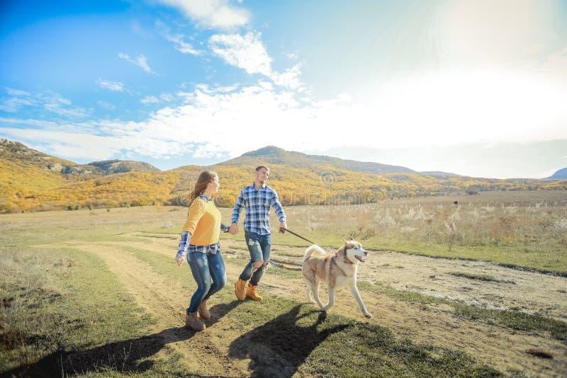 Acople o prado do campo do por do sol do outono do cão do perdigueiro da caminhada que guarda as mãos imagens de stock royalty free