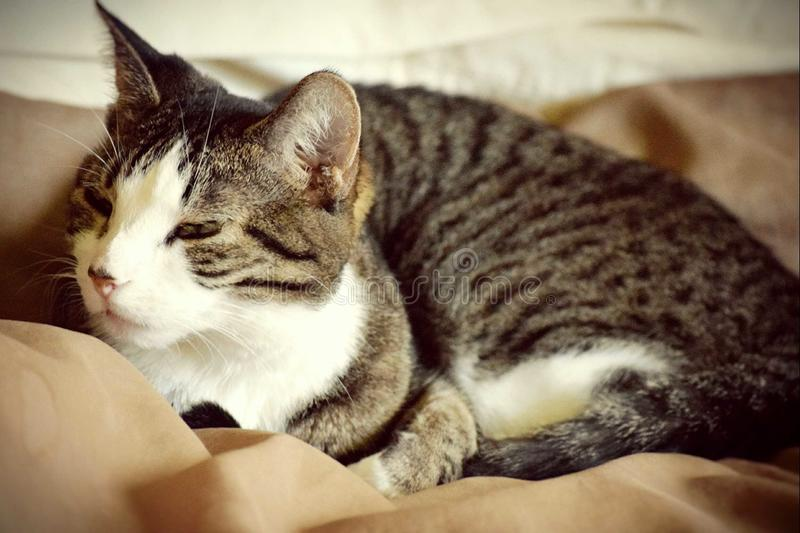 Acordo do gato imagem de stock royalty free