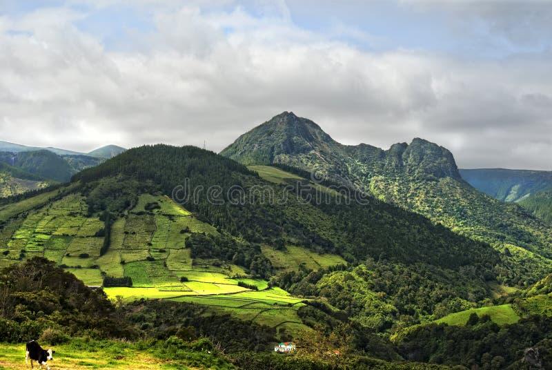 Acores; panorama dei flores isola, Costa Est immagini stock